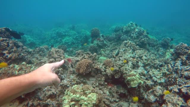 vídeos y material grabado en eventos de stock de snorkling - tubo