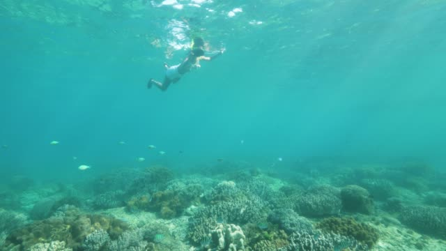 Snorkling woman taking photo to underwater world in transparent sea water. Young woman swimming in snorkeling mask and tube and shooting video to mobile in protective cover.