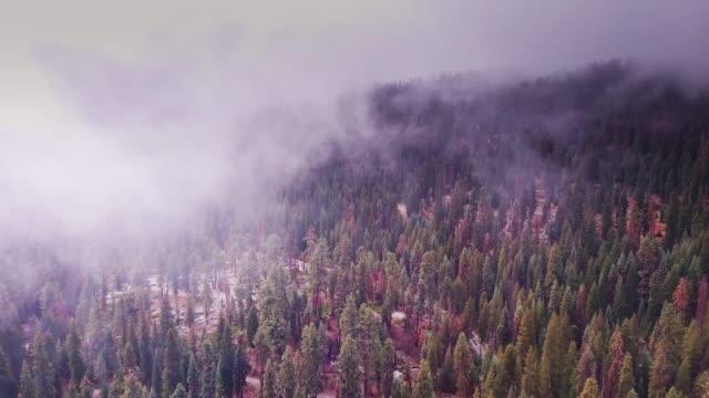 雪とセコイアの霧覆われた山腹 - カリフォルニアシエラネバダ点の映像素材/bロール