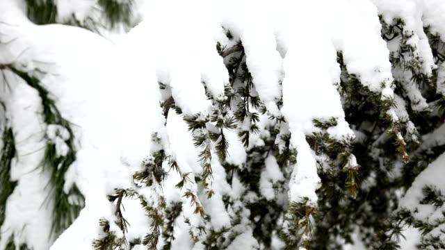 neve e pino - disordine affettivo stagionale video stock e b–roll
