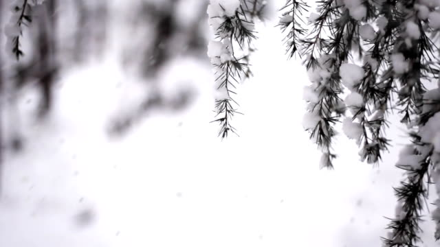 snow and swaying branches (loopable) - snowflake background stock videos & royalty-free footage
