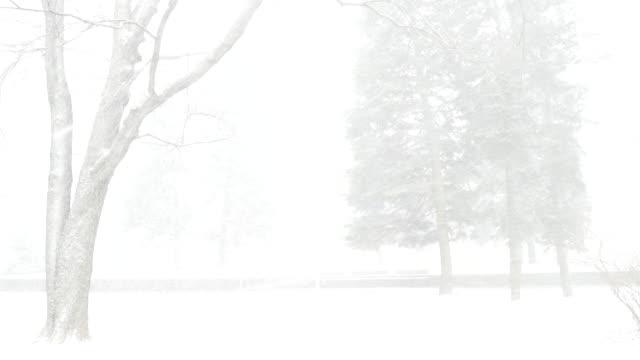 снежная метель в городском парке. - ноябрь стоковые видео и кадры b-roll