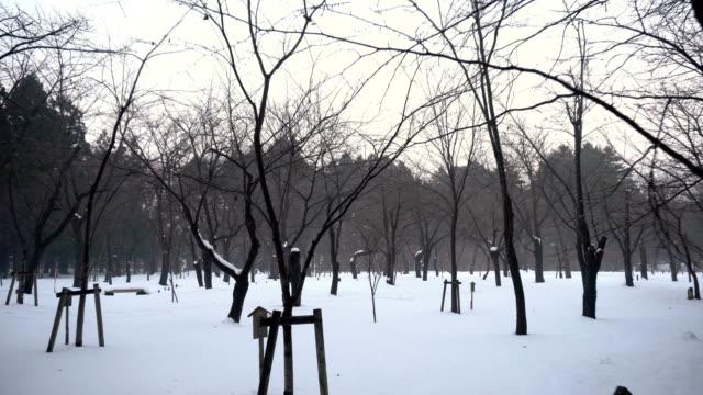 公園の雪に覆われた自然と木々 - 十二月点の映像素材/bロール