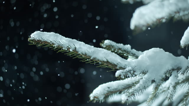 SLO MO Snow covered spruce tree in snowfall at night video