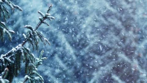 vidéos et rushes de couvert de neige épinette dans la neige - froid