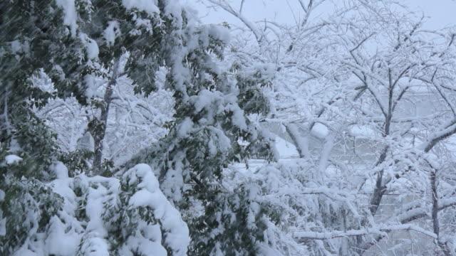 雪に覆われた公園の。東京,日本 ビデオ