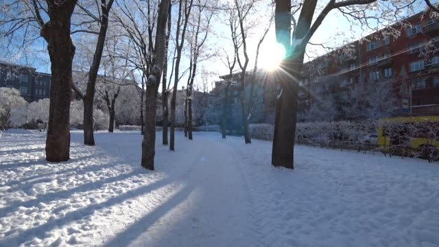 Snow covered trees in a winter city park. video