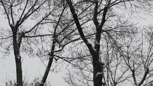 alberi innevati nella stagione invernale - albero spoglio video stock e b–roll