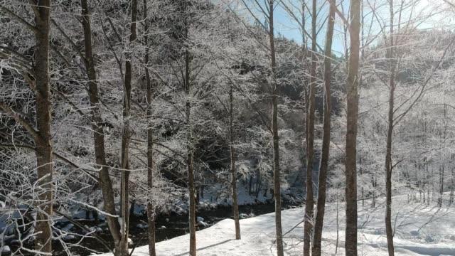 雪に覆われた木々、日本の冬の風景 - 冬点の映像素材/bロール