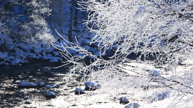 雪に覆われた木々、日本の冬の風景 - 霜点の映像素材/bロール