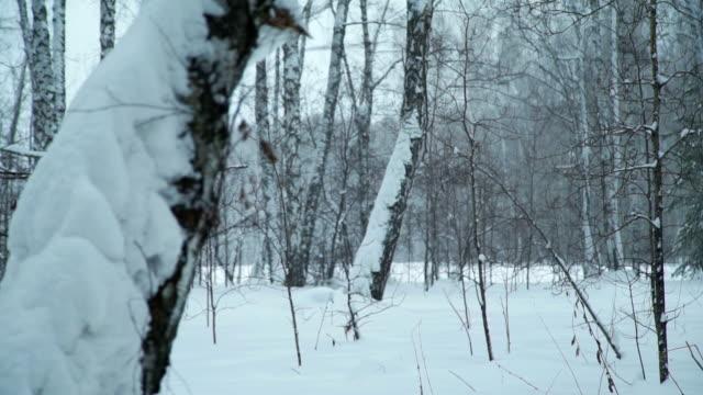 森の中の雪のドリフト - シベリア点の映像素材/bロール