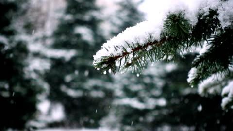 vidéos et rushes de neige qui tombe sur les branches d'arbres sapin - hiver