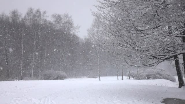 Snow falling in front of forest.