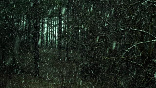 vídeos de stock e filmes b-roll de snow falling in the forest - países bálticos