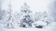 istock Snow Falling   Loopable 491019802