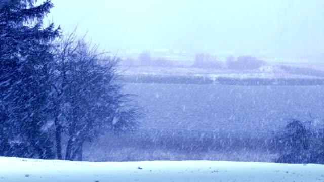 snow falling near the lake video