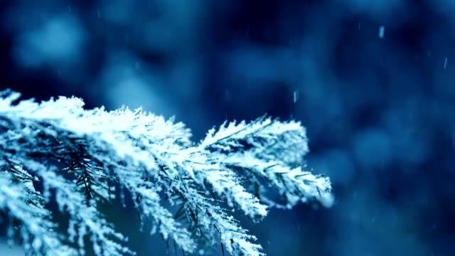 vídeos y material grabado en eventos de stock de nieve que cae en ramas de árboles de pino - pino conífera
