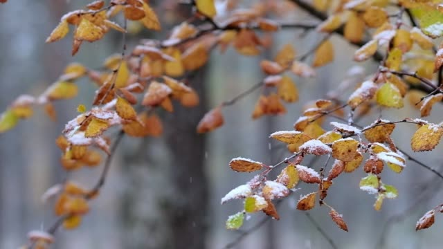 schnee fällt in zeitlupe auf bunte herbstblätter - laub winter stock-videos und b-roll-filmmaterial