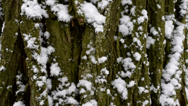 Snow falls in slow motion on background of tree bark video