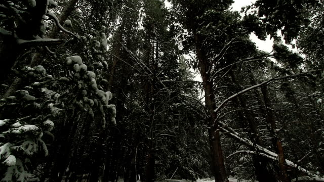 Snow Falls in Yosemite National Forest video