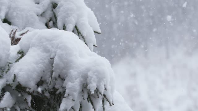 山の吹雪の間に松の木に落ちる雪のフレーク。スローモーション。寒い天候と冬のテーマ。赤いカメラ。 - 冬点の映像素材/bロール