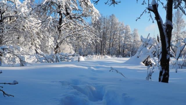 Snow in old back yard
