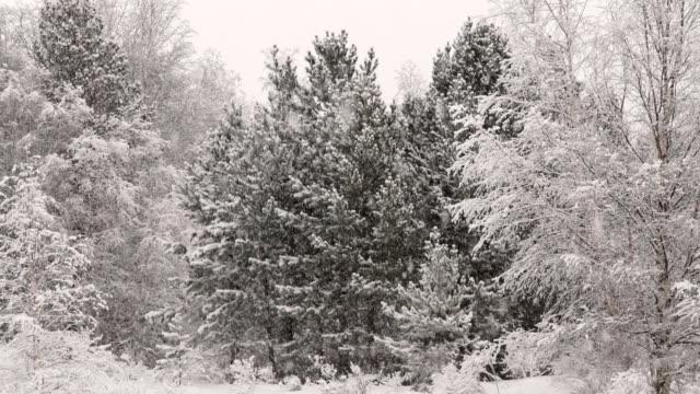 vídeos de stock, filmes e b-roll de neve na floresta  - bétula