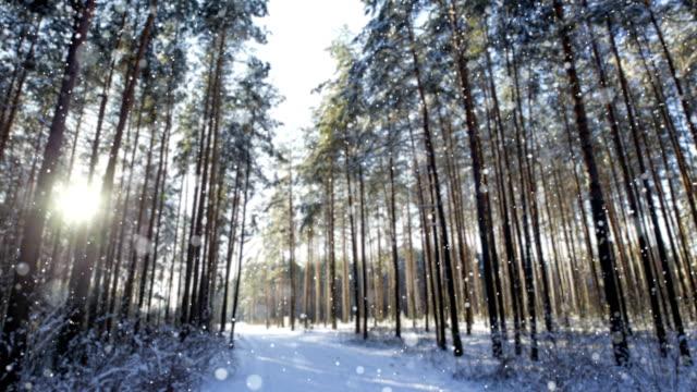schnee im winter morgen wald. selektiven fokus - schneeflocke sonnenaufgang stock-videos und b-roll-filmmaterial