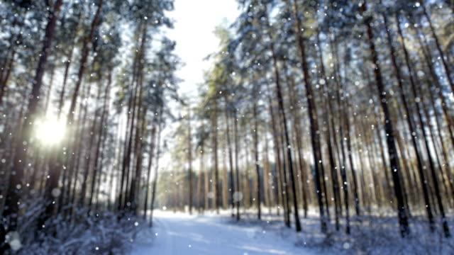 schnee im winter morgen wald (loopable) - schneeflocke sonnenaufgang stock-videos und b-roll-filmmaterial