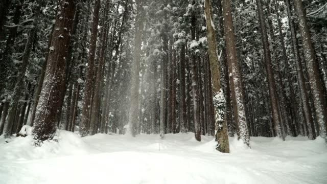 白川村で雪に覆われた鬱蒼とした森から雪が降っています。 - 冬点の映像素材/bロール