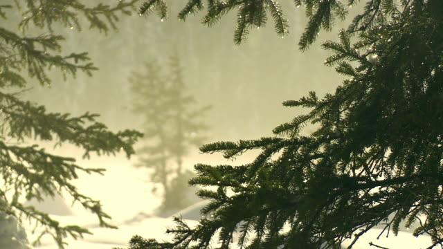 木々に雪が溶けている - スロベニア点の映像素材/bロール