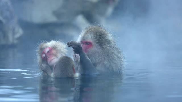 HD :雪猿ニホンザル家族の温泉 ビデオ