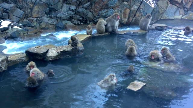 フル hd の温泉で雪猿ニホンザル - 猿点の映像素材/bロール
