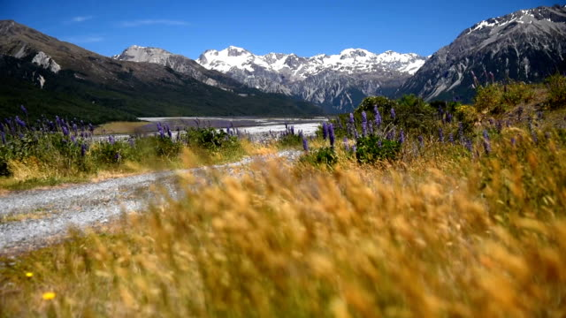Snow mountain with yellow field and blue sky nature footage background in arthur's pass , canterbury , new zealand video