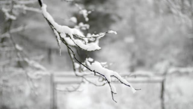 neve sui rami in inverno - fronda video stock e b–roll