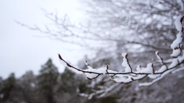 Snow on branches in winter video