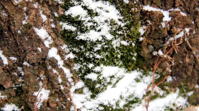snow on the bark - torv bildbanksvideor och videomaterial från bakom kulisserna
