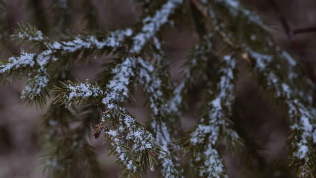 雪の木の枝 - 霜点の映像素材/bロール
