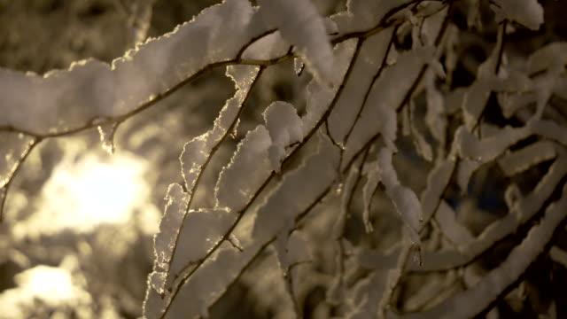 snö på träden på natten - gren plantdel bildbanksvideor och videomaterial från bakom kulisserna