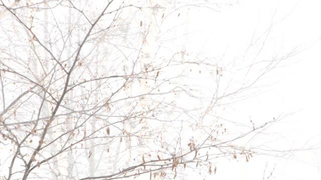 tempesta di neve nella foresta giorno 4k video - fronda video stock e b–roll