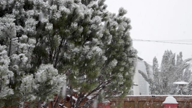Snow Storm Over Pine Bush in Backyard