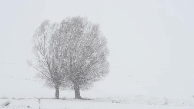 Snow Storm video