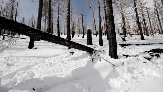 Snowboarder Backside 180 Off Log video