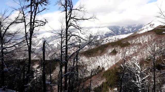눈 덮인 산 겨울 풍경 - 세르비아 스톡 비디오 및 b-롤 화면