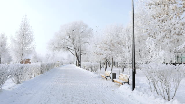 Snow-covered city park Alley and benches in a snowy city park park bench stock videos & royalty-free footage