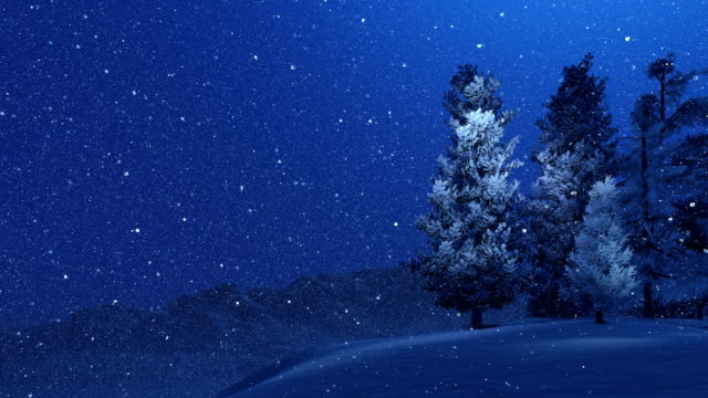 Snow-covered spruces and snowfall at night