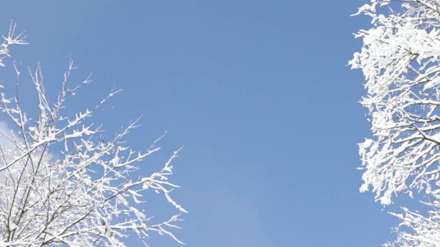 coperta di neve albero in michigan woods - fronda video stock e b–roll