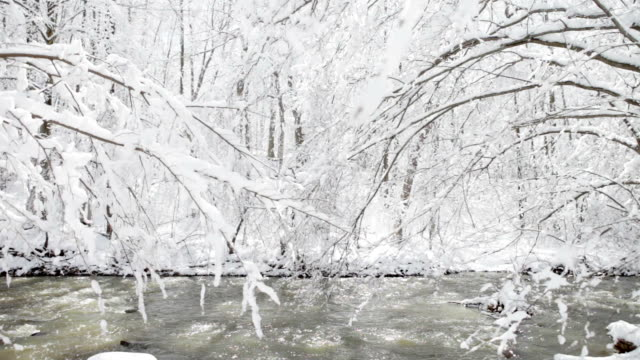 Snow-Covered Trees in Michigan Woods video