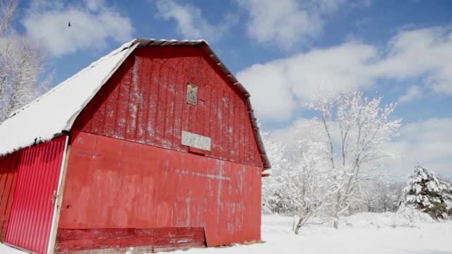 snow-covered trees in michigan woods - ahır stok videoları ve detay görüntü çekimi