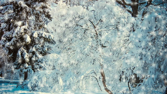 Snow-covered trees in the forest video